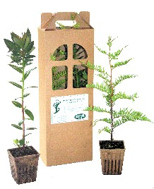Tree Seedling 2-Pack